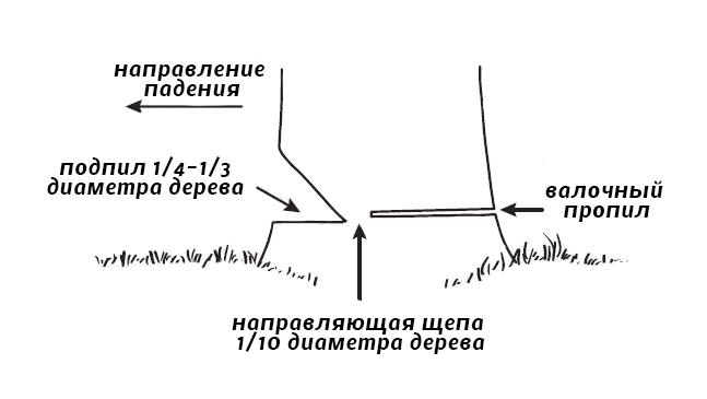 Схема валки дерева