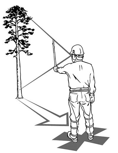 Определение зоны падения дерева